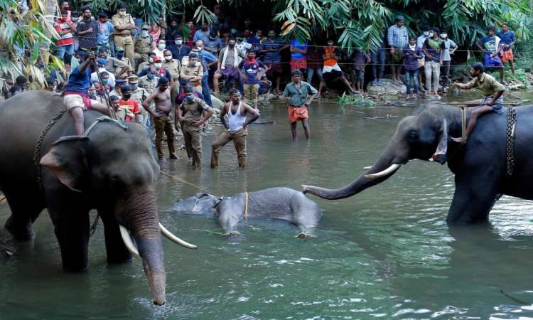 كيرالا: أنثى الفيل تثير الرأي العام بالهند والعالم يتضامن